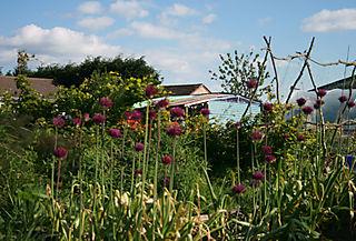 Garden towards shed