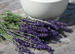 News_lavender_step1