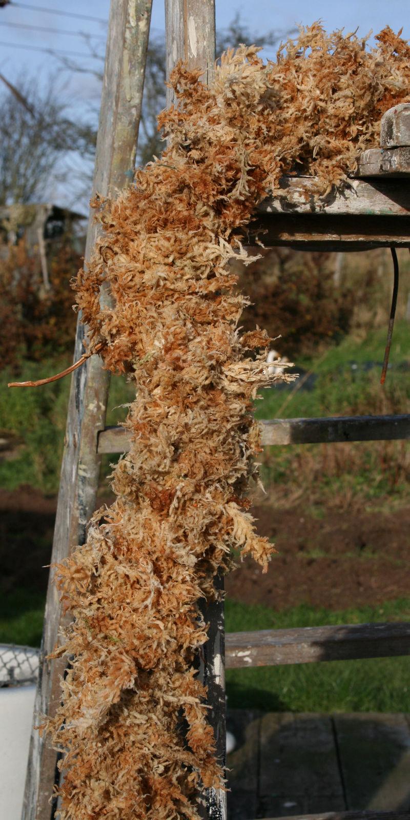 Mossy garland on ladder