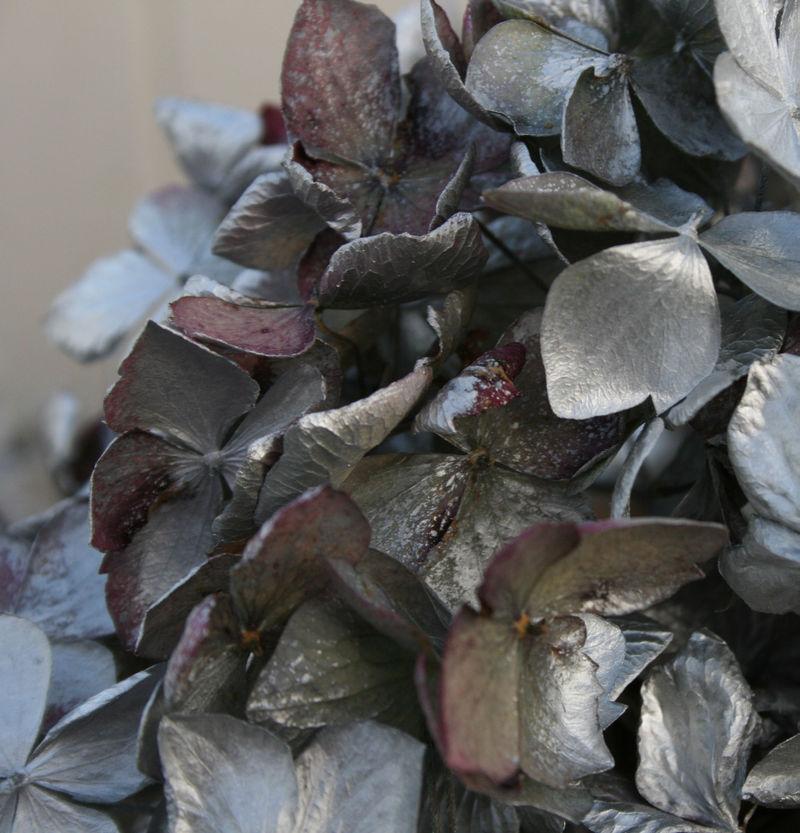 Silvered hydrangea