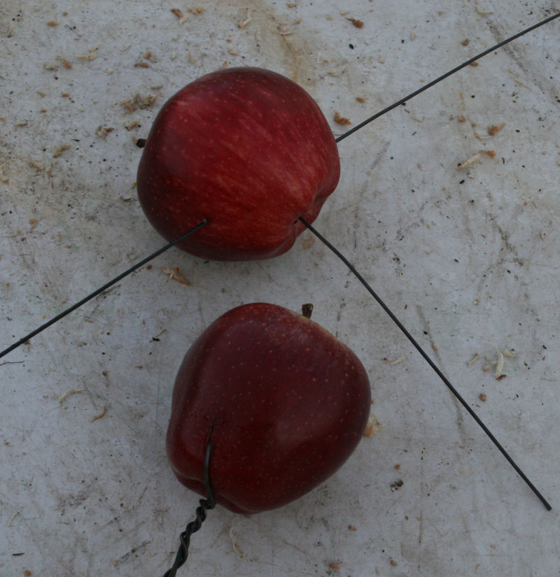 Wired apples