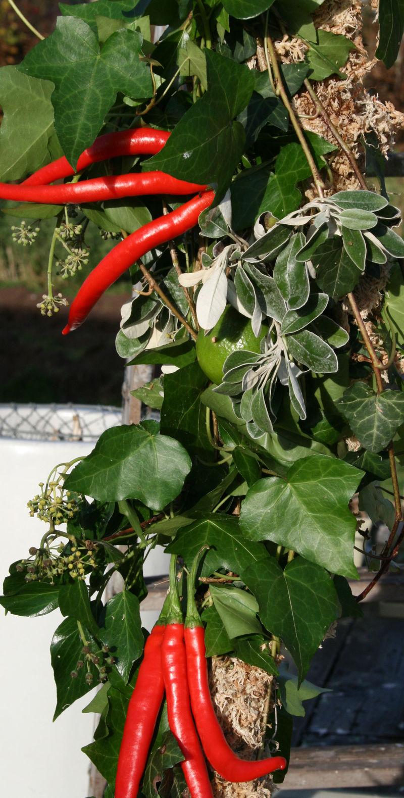 Chillies in garland