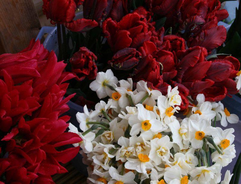 Tulips outside cabin