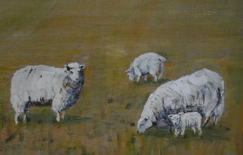 Grazing sheep Elizabeth Lindsey