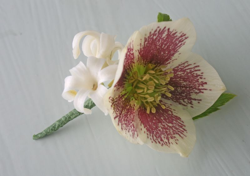 Hellebore button hole