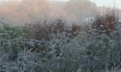 Garden-in-frost