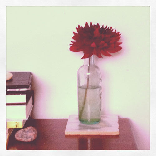 Dahlia-in-bottle
