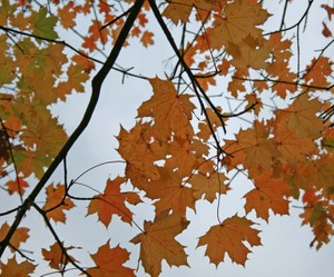 Leaves_and_sky